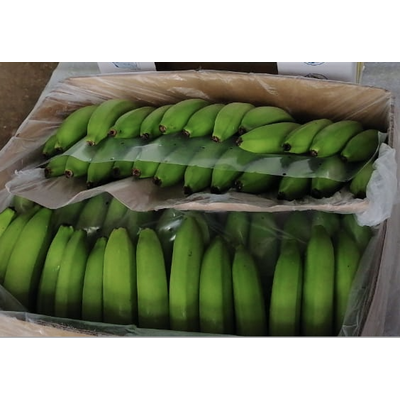 Wholesale Bananas | Wholesale Bananas Suppliers